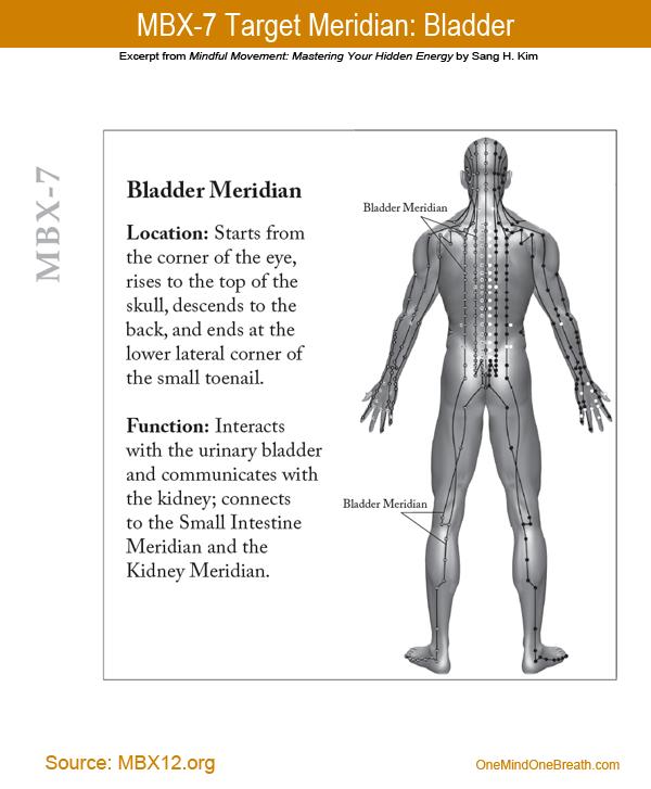 MBX 7 Bladder Meridian