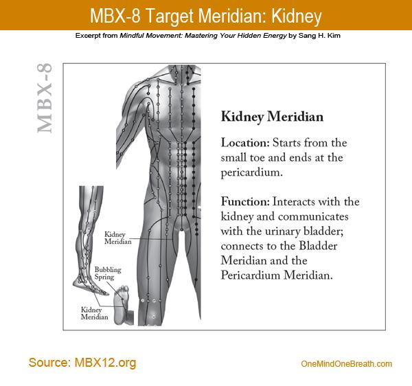 MBX8 Kidney Meridian