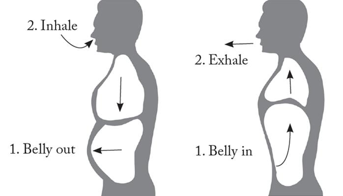 Mechanics of Belly Breathing