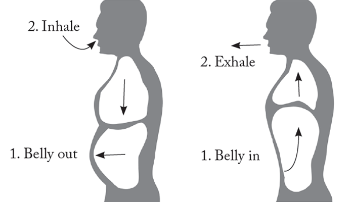 Mechanics of Belly Breathing