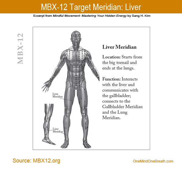 mbx12-Liver Meridian Chart